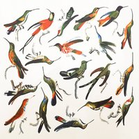 Colorful Hummingbirds Decal Sheet