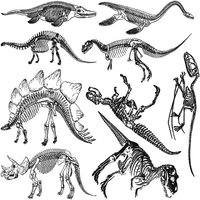 Dinosaur Skeltons Decal Sheet