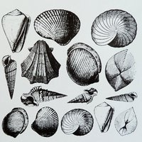 Sea Shells Decal Sheet
