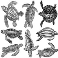 Sea Turtles Decal Sheet
