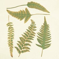 Two Color Ferns Decal Sheet